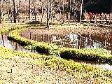 三宝寺池の水辺観察園