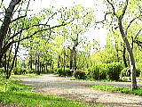 三宝寺池の森