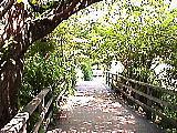 三宝寺池入口ちかく