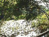 三宝寺池(水辺観察園前)