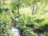 水辺観察園内の小川
