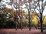 ケヤキ広場