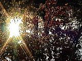 木の実と太陽