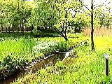 三宝寺池のひょうたん池