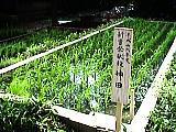石神井氷川神社の神田