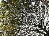 呼吸する木