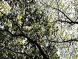 呼吸する木々