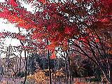 真っ赤になった葉