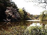 三法寺池の春