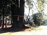 和田稲荷神社の境内